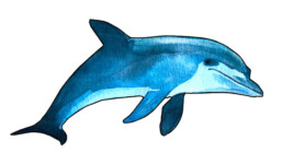 Delfin Angela zum Ausschneiden Kistentheater Vorschau | kelonya.ch