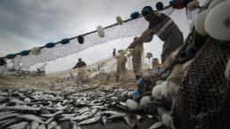 Fische-Im-Netz-am-Strand