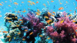 Korallenriff-mit-Fischen | kelonya.ch